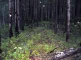 http://velobratsk.ru/forum/img/_fr/0/s2346978.jpg
